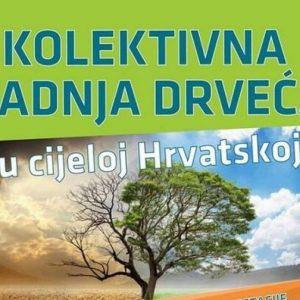 ZASADI STABLO, NE BUDI PANJ Županija i Uprava šuma Slatina posadit će sa školama i vrtićima oko 200 stabala