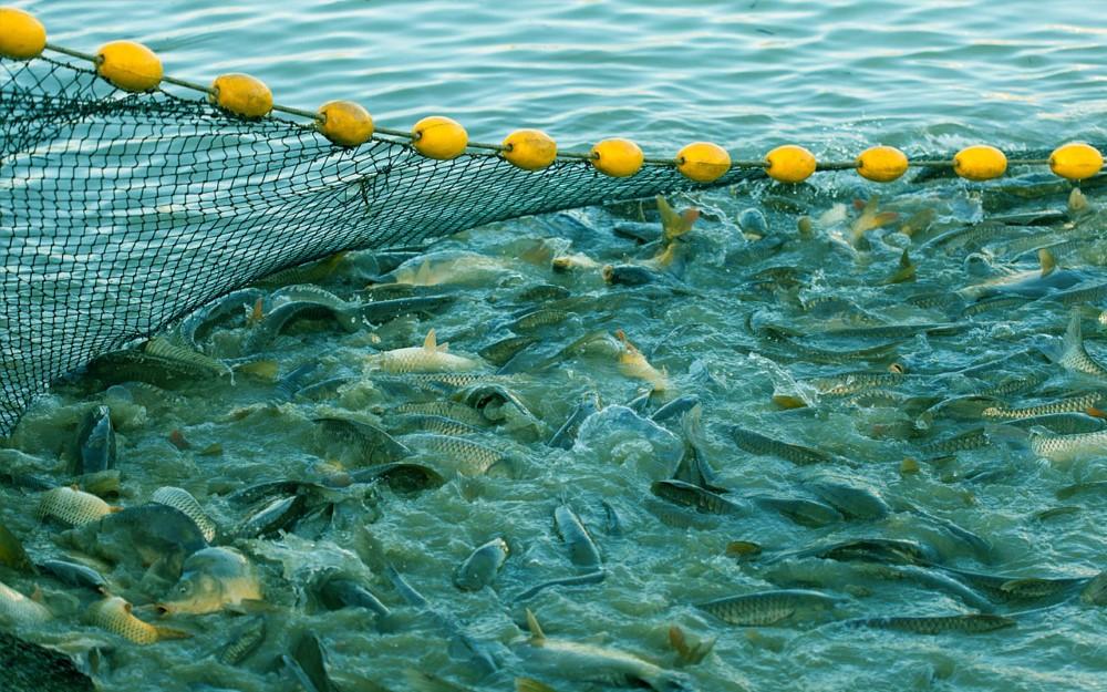 Izlov ribe snimio PP Orahovica 2 Custom