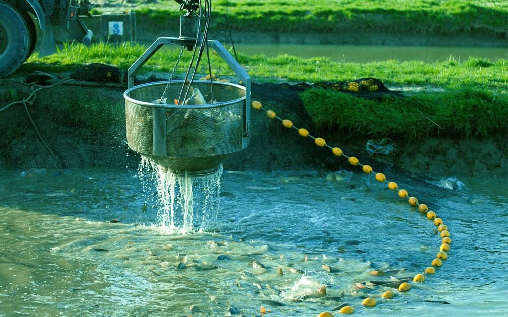 Izlov ribe snimio PP Orahovica 3 Custom