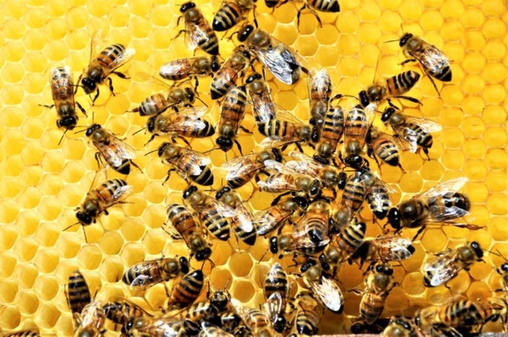 closeup shot group bees creating honeybee full delicious honey 181624 15784 1